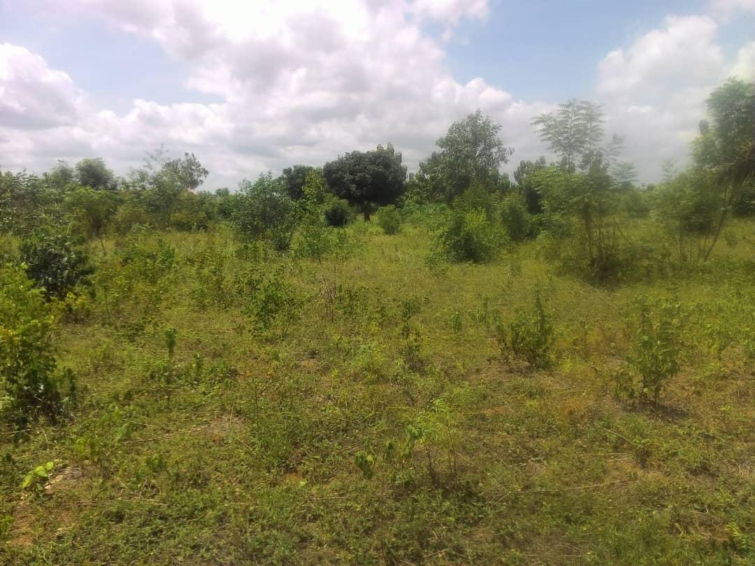 Terrain à vendre ,  zanguera akepedo                         (A 850m du goudron de contournement)                     , Lome : 5 000  000 FCFA
