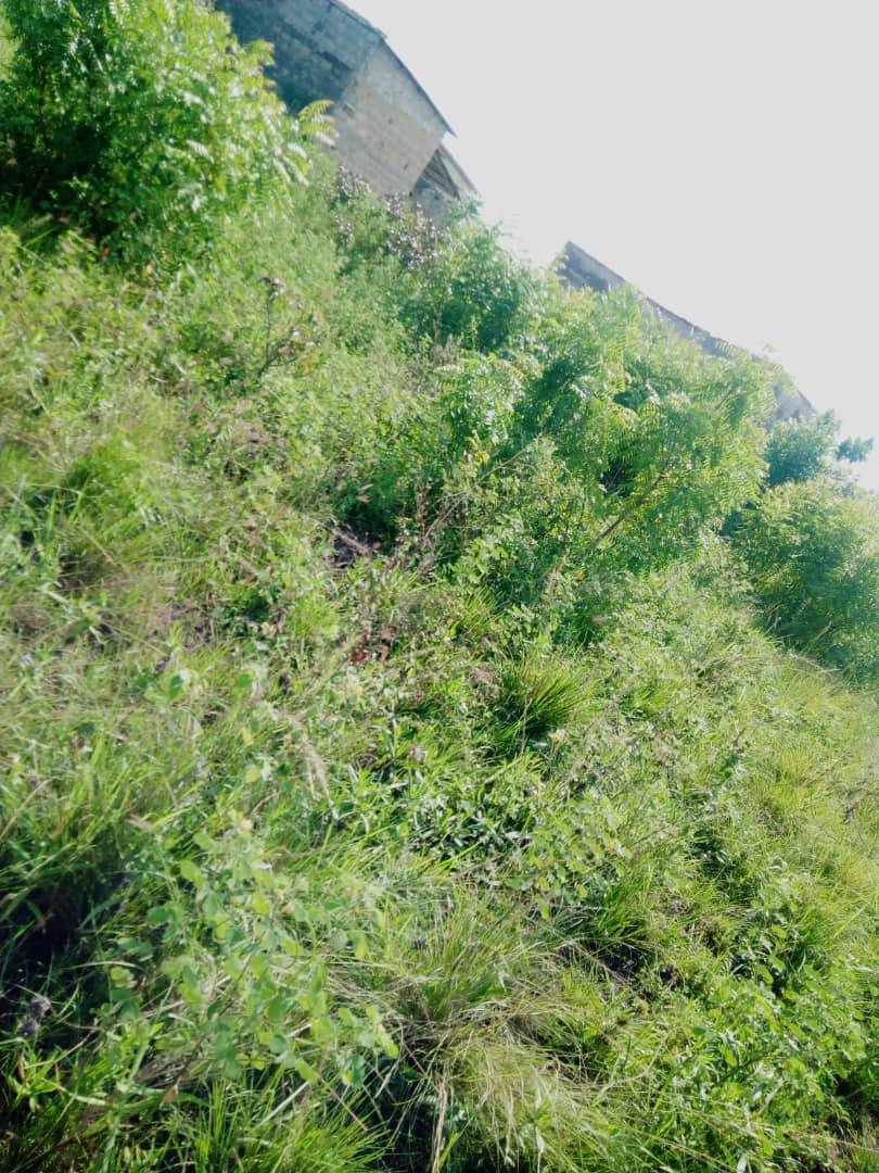 N° 4378 :                         Terrain à vendre , Agoe-djikame, Lome, Togo : 20 000  000 XOF/vie