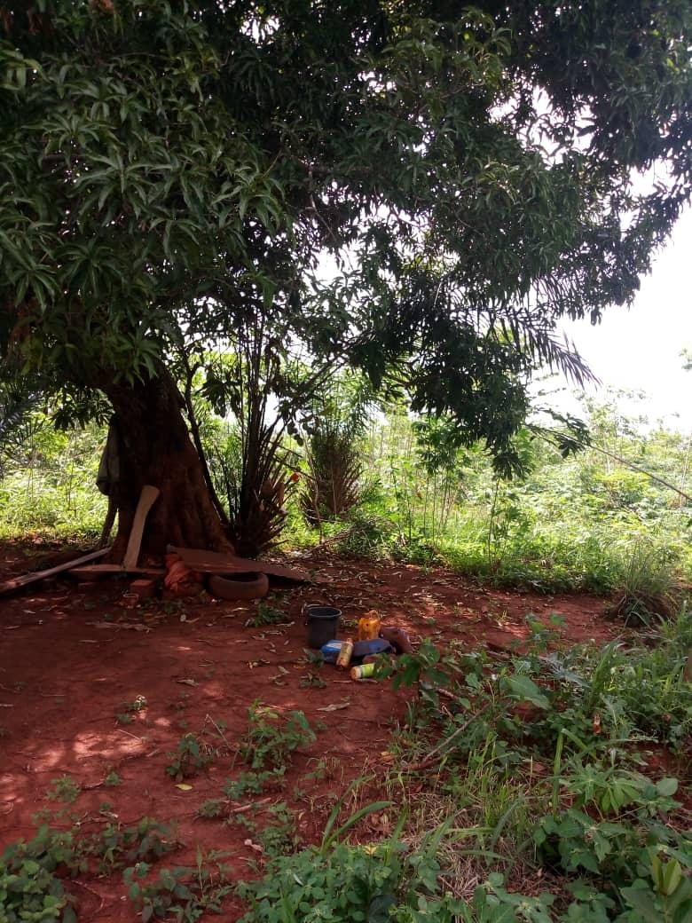 Terrain à vendre , akepedo                         (Face au monistère à 200 m du goudron)                     , Akepe : 6 000  000 FCFA
