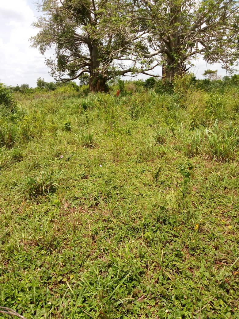 Terrain à vendre , tsiviepe                         (A 2 km du goudron)                     , Keve : 6 000  000 FCFA
