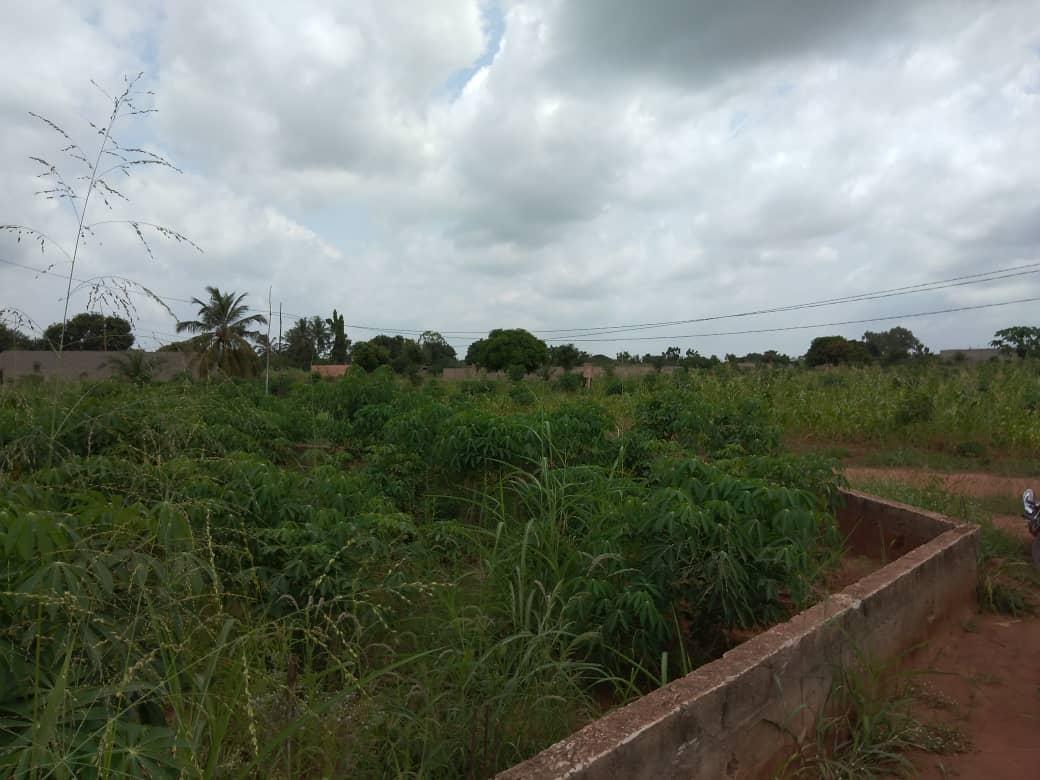 N° 5094 :                         Terrain à vendre , Zanguera, Lome, Togo : 11 000  000 XOF/vie