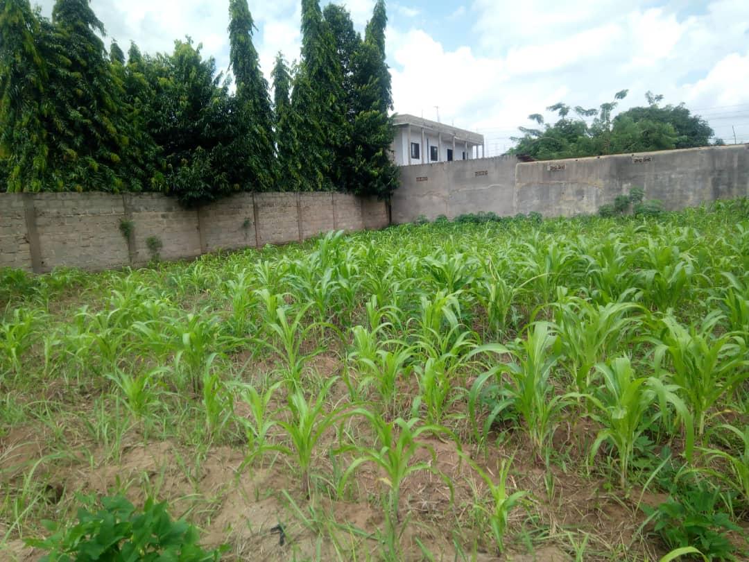 Terrain à vendre , agoe                         (à 200m du goudron derrière le marché de Légbassito)                     , Lome : 17 000  000 FCFA
