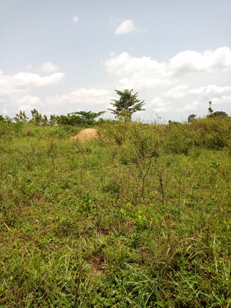 N° 4504 :                         Terrain à vendre , Tsiviepe, Keve, Togo : 6 000  000 XOF/vie