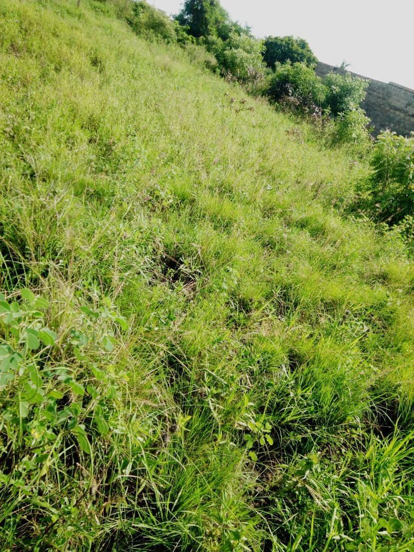 Terrain à vendre , agoe-djikame                         (Non loin de l'école KRI KRI)                     , Lome : 20 000  000 FCFA